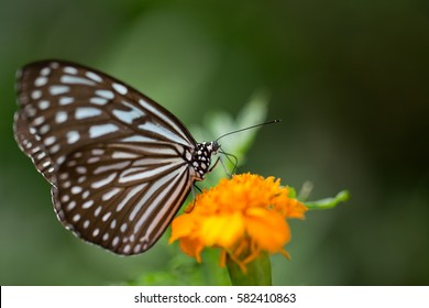 Black and white butterfly in park