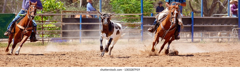 A black and white calf being lassoed in a team calf roping event at a dusty country rodeo