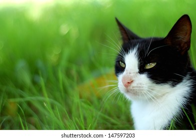 black and white cat. background is green - grass. outdoor photography.