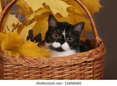 Black and white cat in a basket with yellow leaves