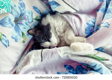 Black and white cat in the bed