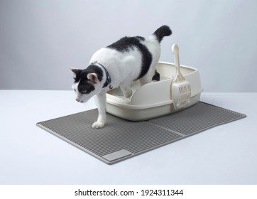 Black and white cat getting out from litter cat tray on litter mat on white background