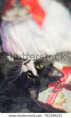 Black White Cat Gifts Through Frosty Stock Photo Edit Now