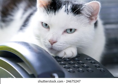 A black and white cat with intense blue eyes is lying on a desk, guarding the telephone. Indoor shot. Shallow DOF. Focus on eye.