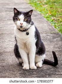 Black and white cat leaning comically sideways while sitting down on the sidewalk