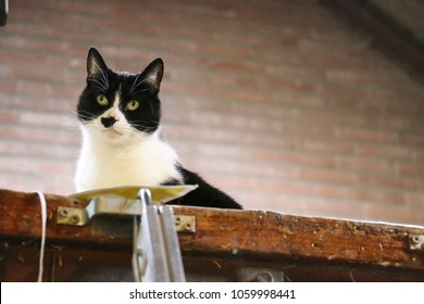 Black and white cat looking
