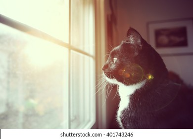 Black and white cat looking through a dirty window to the outside, lens flare, Instagram filter
