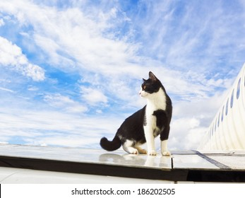 black and white cat on an airplane