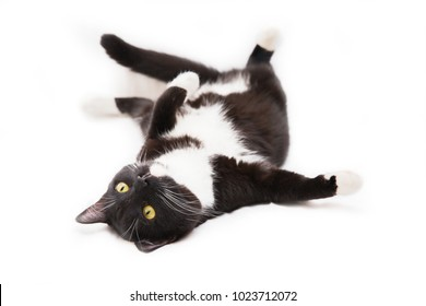 Black and white cat on a white background. Cat lying on a back