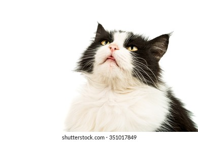 black and white cat on a white background
