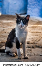 Black and white cat on the street of blue city, Chefchaouen in Marocco.
