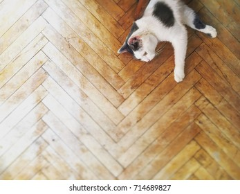 Black and White Cat on Wood Floor top view