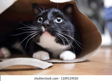Black and white cat in a paper bag, shallow focus on tip of nose