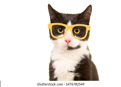 Black and white cat portrait facing the camera wearing yellow glasses isolated on a white background