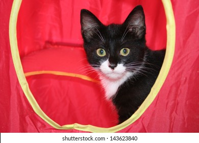 Black and white cat in red tent