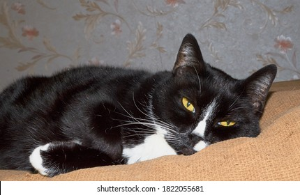 Black and white cat is relaxing.