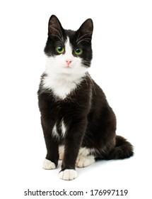 Black & white cat sit on white isolated background.