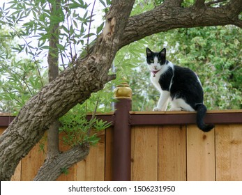 Black and white cat sits on the wood wall. Cat sits near tree