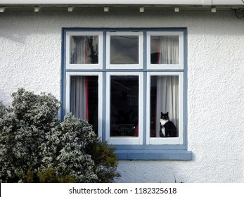Black and white cat sitting in front window of old house, Petone, Lower Hutt, New Zealand
