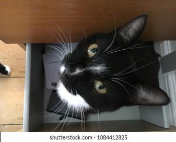 Black and White Cat Sitting Inside Desk Drawer in Office