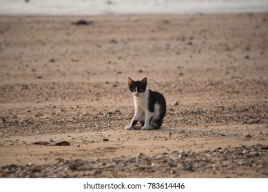 A black and white cat sitting on the beach