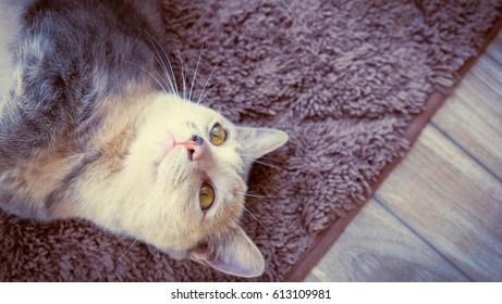 Black and white cat sleeping on carpet background, Cat portrait