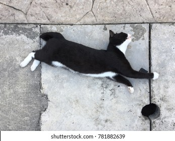 A black and white cat stretching on a sidewalk, top down view.
