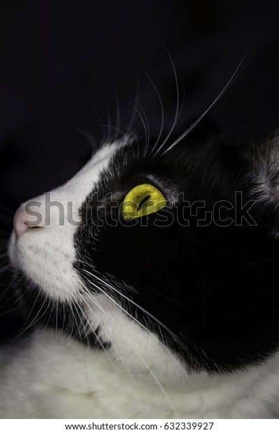 A black and white cat with striking yellow eyes looking in the distance