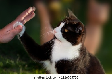 black and white cat touches the hand of a woman while being in the garden