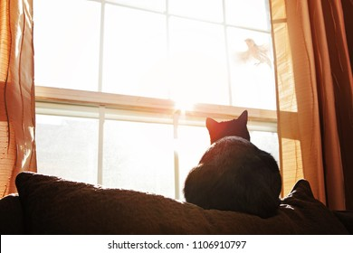 Black and White cat watching a bird through a window the late afternoon sun
