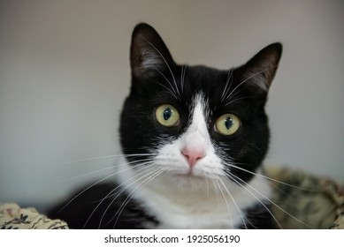 Black and white cat with yellow eyes looking at the camera