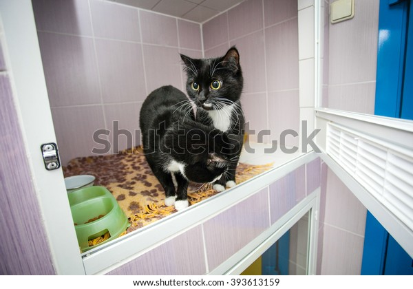 Black and white cats  in an animal shelter