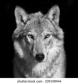 Black white wolf images stock photos vectors shutterstock