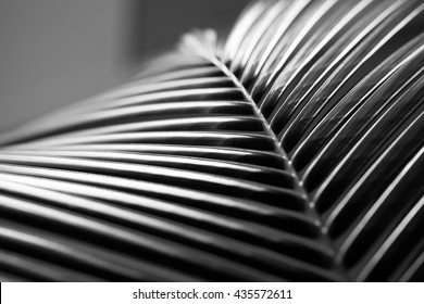 Black and white close up view of beautiful green palm leaf on natural background