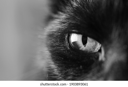 black and white closeup of cat's eye, eye of an black cat watching you