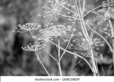Black and white close-up detailed dry straw background, for vintage countryside style for design and wallpapers, autumn collection, at Zlato Pole protected area, Dimitrovgrad municipality, Bulgaria - Shutterstock ID 1608158839