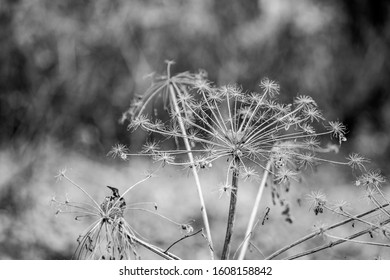 Black and white close-up detailed dry straw background, for vintage countryside style for design and wallpapers, autumn collection, at Zlato Pole protected area, Dimitrovgrad municipality, Bulgaria - Shutterstock ID 1608158842