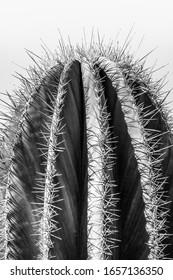 Black and white closeup detalis of southwestern desert cactus with sharp spines framed against a blue sky