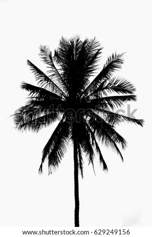 Black White Coconut Tree Plant On Stock Photo Edit Now 629249156