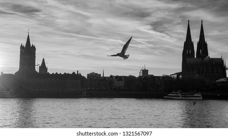 Black and White - Cologne sunset city skyline with Cologne Cathedral (Kölner Dom) and Rhine River with Seagulls, Cologne, Germany