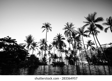Black and white color of coconut tree on the beach at Samui island