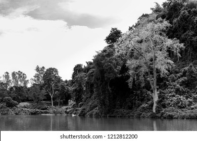 Black and white color of a tree on natural background
