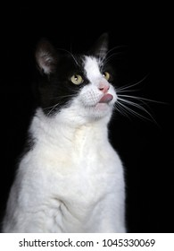Black and white colored cat