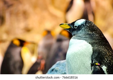 Black and White Colored Penguin in a Cold Place