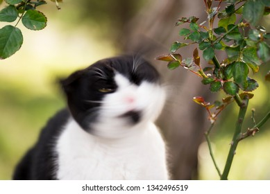Black and white colored stray cat with a goatee.