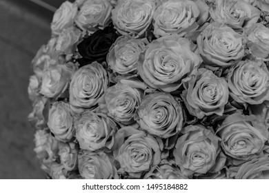 Black and white composition of large bouquet of white roses with a red rose within