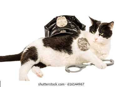 Black and white cop cat in police uniform with  hat, badge and handcuffs. On pure white background.