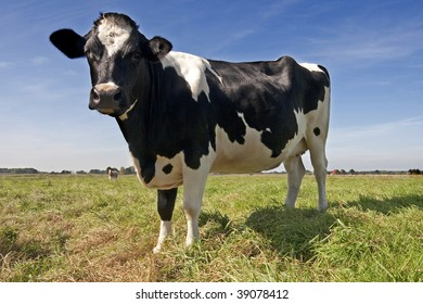 Black and white cow in green grass against blue sky