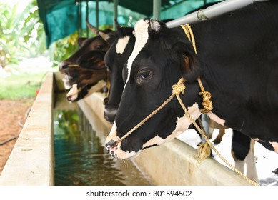 1000 Cow Shed Stock Images Photos Vectors Shutterstock