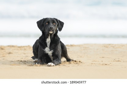 Black and white cross breed dog playing at the beach
